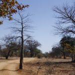 Baobab project-B4D(1)